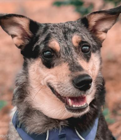 Como crear una llamada infalible con tu perro