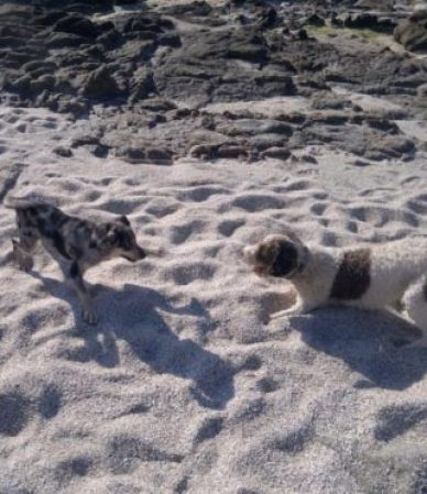 almohadillas calor perros